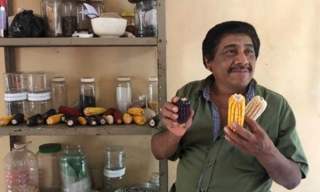 Muere Bernardino Canul Xix, protector de semillas nativas