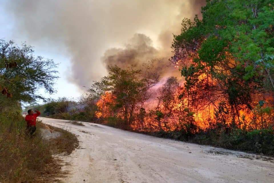 Incendios forestales, con graves daños en Quintana Roo