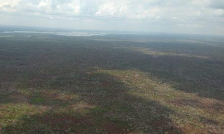 Lluvias 'alivian' incendios forestales en Quintana Roo