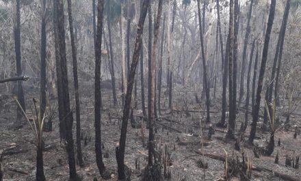 Lluvias apagaron fuego en Reserva de la Biósfera Ría Lagartos