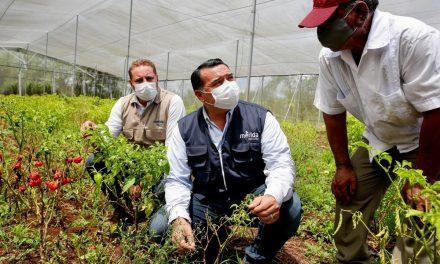 "A comisarías de Mérida, apoyos emergentes de ""Manos al campo"""