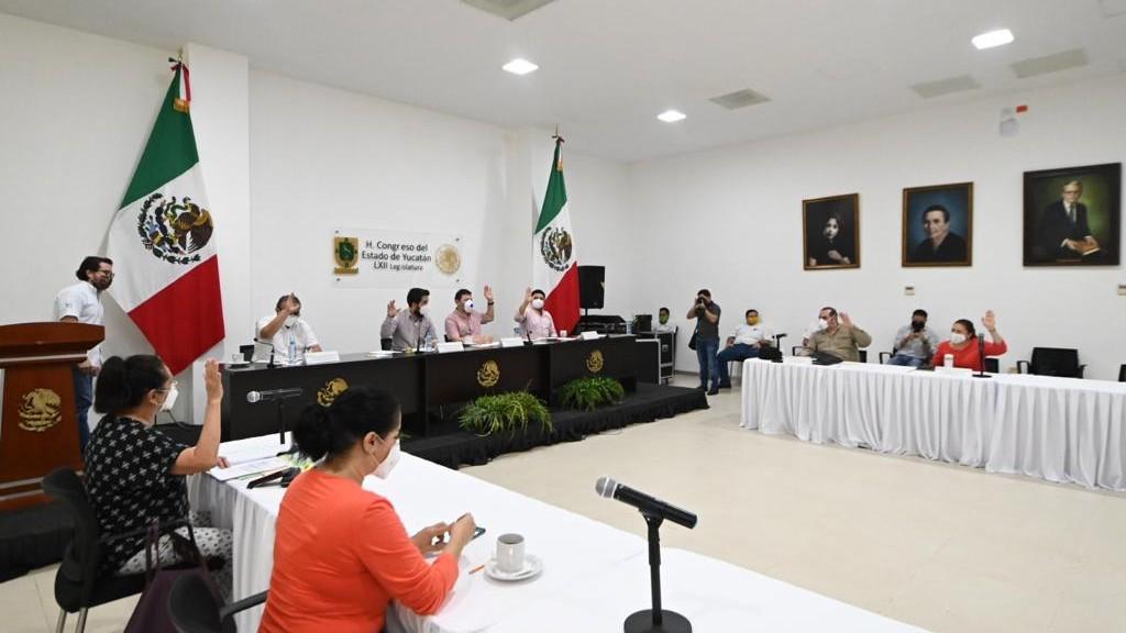 Será delito en Yucatán derribar dolosamente uno o más árboles urbanos
