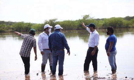 En pérdida total 85 por ciento de cultivos en Yucatán; emergen más daños