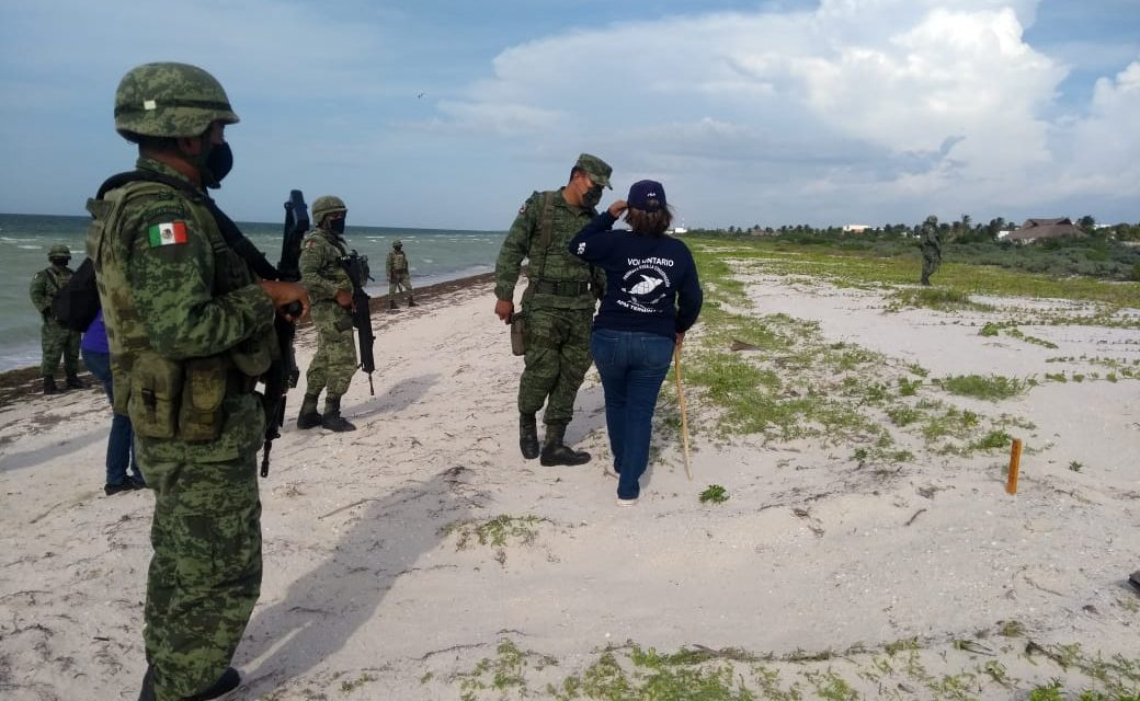 Unen manos en Telchac Puerto para proteger tortugas marinas y sus nidos (Video)