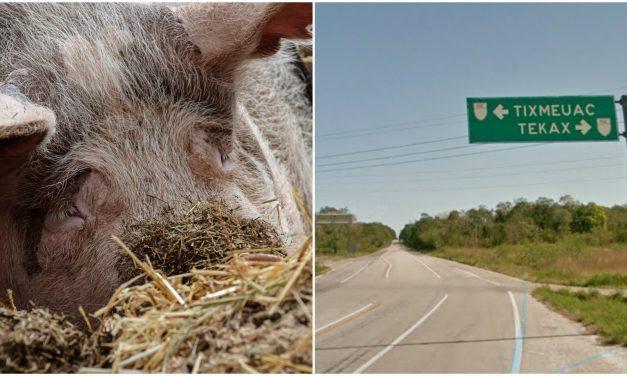 Ambientalistas ganan otro episodio contra granjas porcícolas en Yucatán