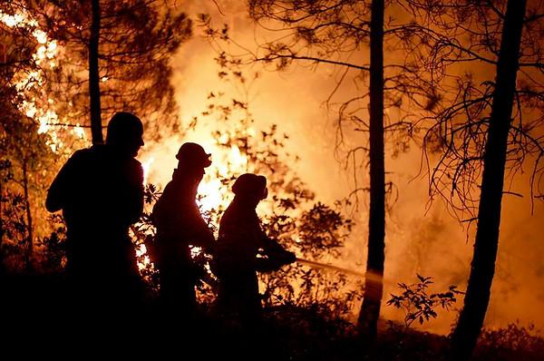 """""""Incendios, bosques y futuro: una crisis fuera de control"""", informe y alerta"""