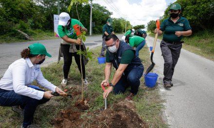 Va en 80 por ciento meta de 100 mil árboles en Mérida este trienio