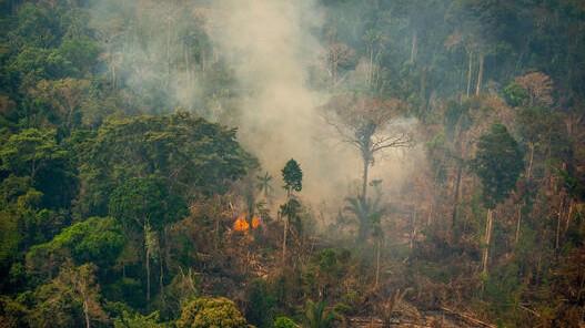 Advierte Greenpeace sobre incendios en la Amazonía, zona fundamental para el planeta