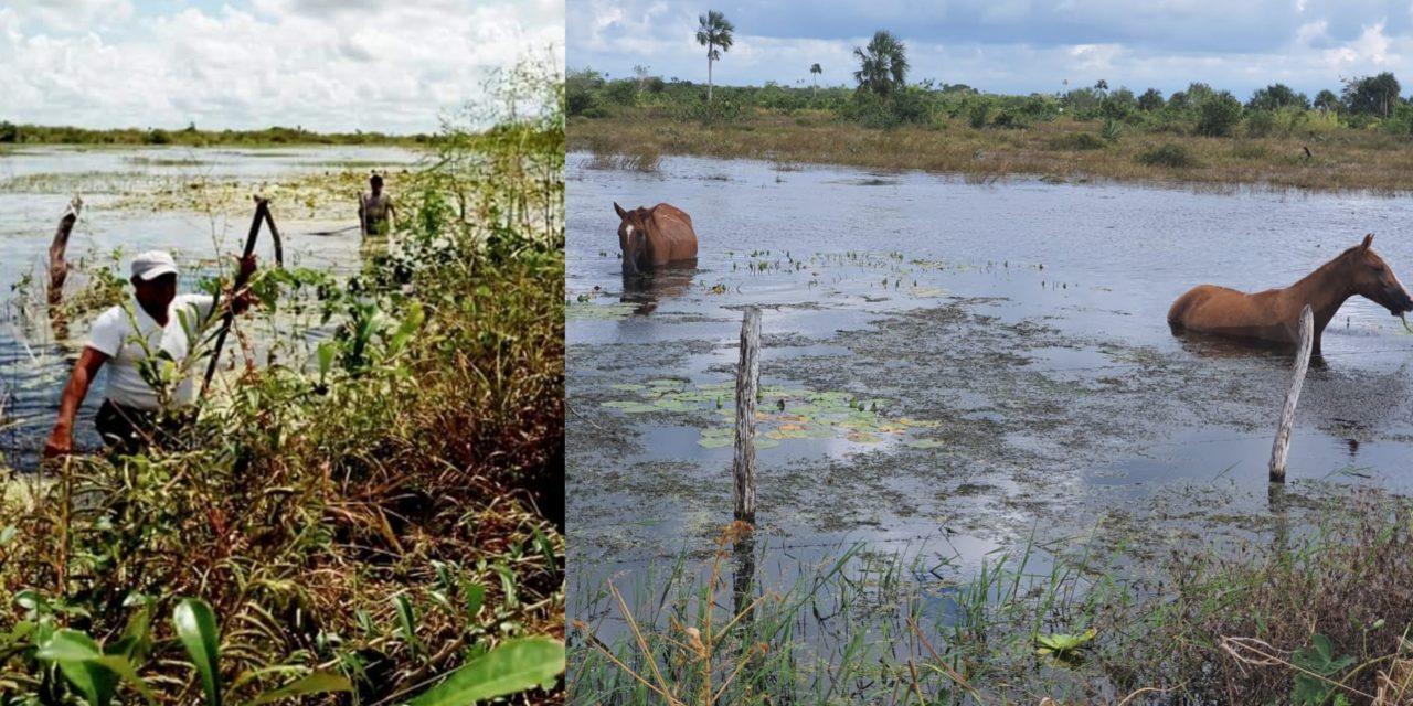 Levantan censo federal de campesinos afectados por recientes inundaciones