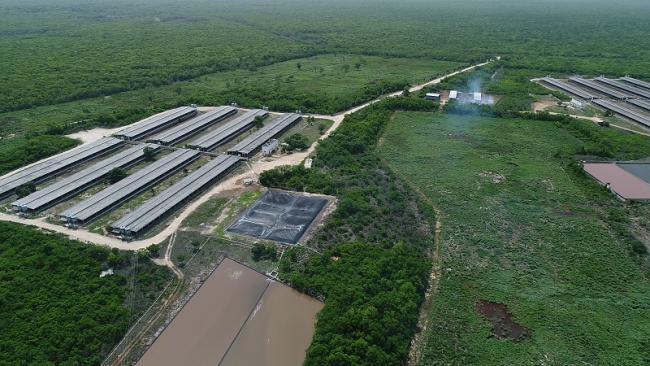 Seguirá cerrada mega granja porcícola Homún, hasta sentencia de SCJN
