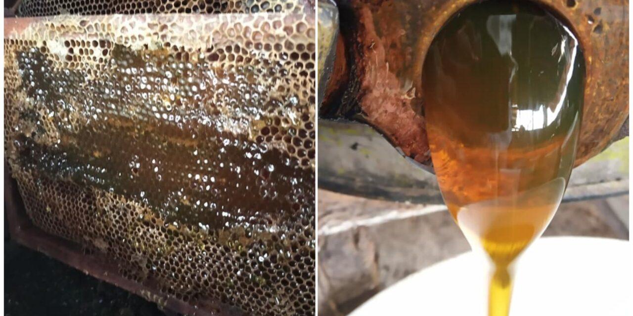 Las abejas y la producción de miel, reflexión de expertos en foro