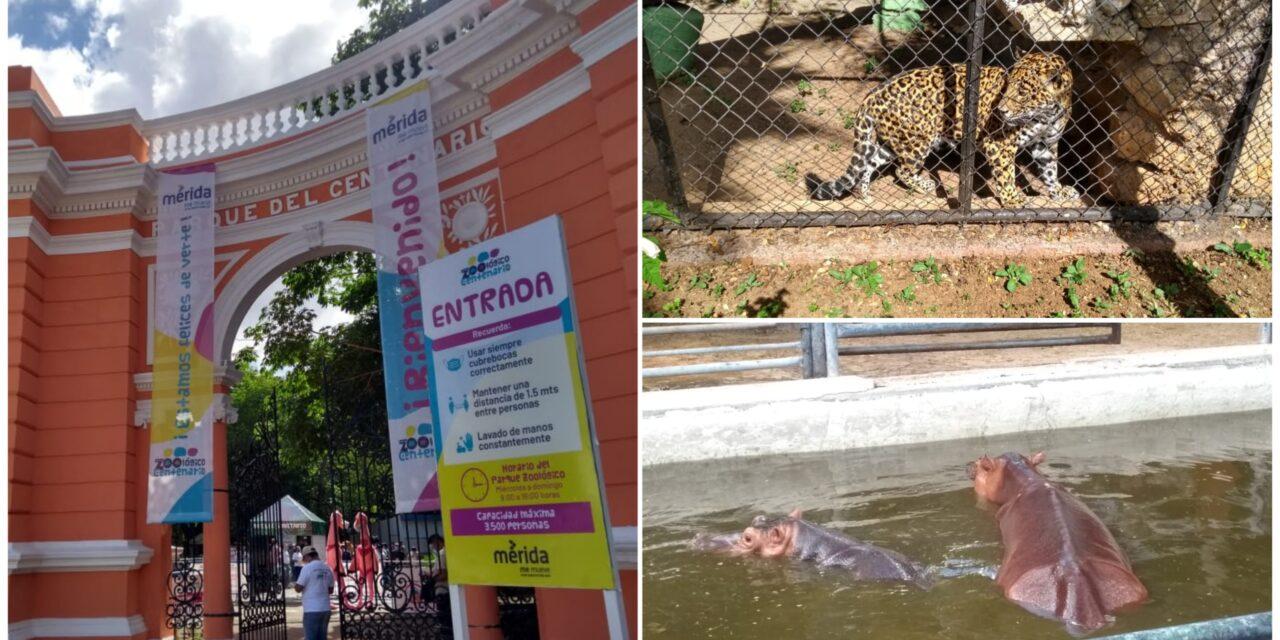 Icónico parque Zoológico del Centenario reabre este viernes