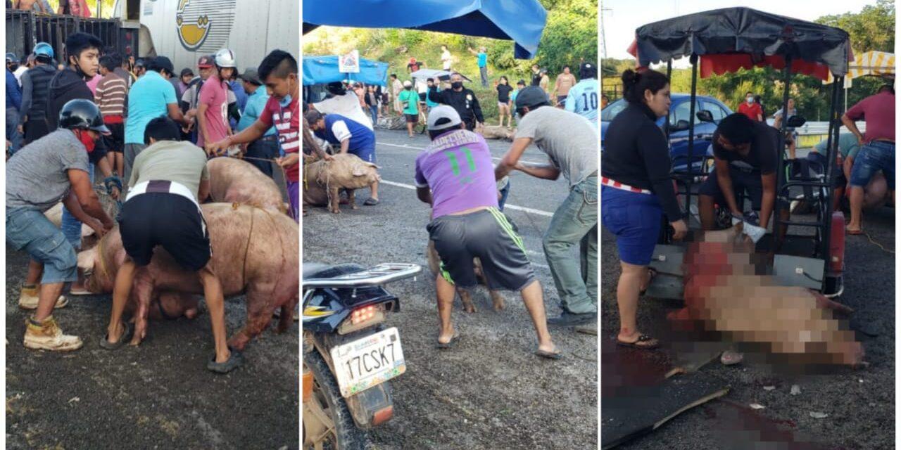 Saquean en Campeche vehículos accidentados y cargados con animales
