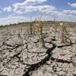 Resiente humanidad destrucción de ecosistemas ¿Pasaremos del Siglo XXI?