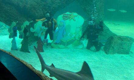 Celebran Navidad y Año Nuevo con nacimiento dentro de acuario con tiburones