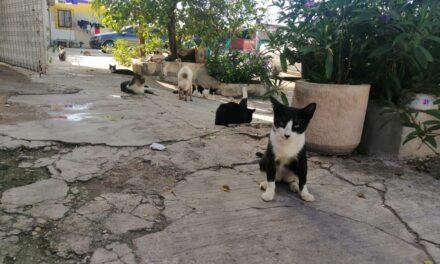 La otra cara de los gatos: invasores y depredadores