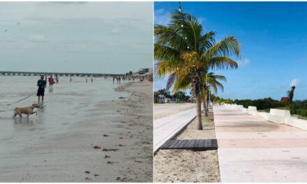Malestar por desechos de perros en malecones y playas de puerto Progreso