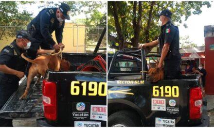 Policías en Yucatán detienen a un perro acusado de matar a un gato