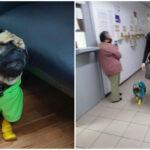"""Harley """"el Tuerto"""", perro terapeuta en áreas Covid del Hospital ISSSTE-Mérida (Video)"""
