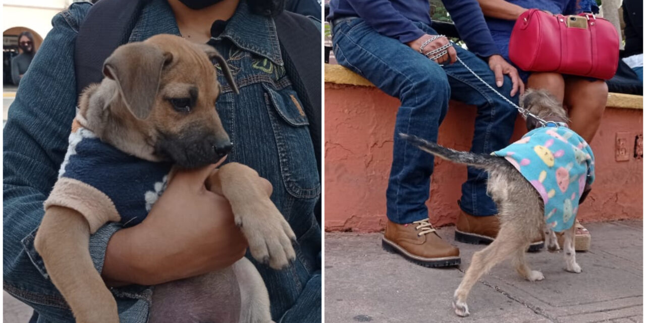 Municipio de Mérida prepara mejoras en atención de animales callejeros