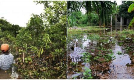 Desplome agrícola en Yucatán incide en carencia alimentaria y enfermedades