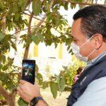 'ÁrbolMID', aplicación para conocer la variedad de árboles en Mérida