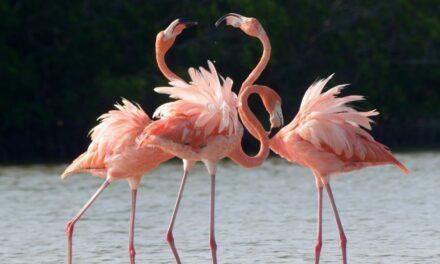Distintiva ave de la Península de Yucatán, amenazada en su hábitat