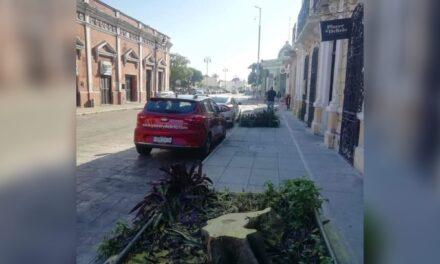 Exhiben doble arboricidio en barrio de Santiago
