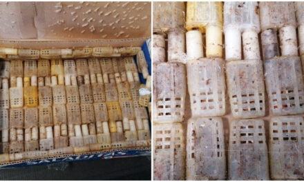 Interceptan tráfico ilegal de abejas en Aeropuerto Internacional de Mérida