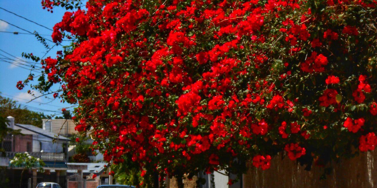 Hace 50 años que la primavera no llega a Yucatán un 21 de marzo… inicia este sábado 20