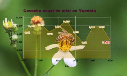 Yucatán registra en febrero 2021 su peor cosecha mensual de miel desde 2010