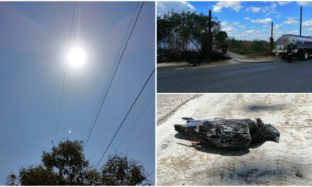 Calor infernal: apenas el inicio. Onda cálida por más de una semana