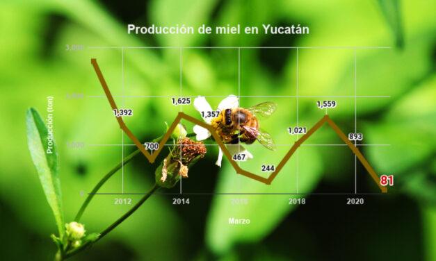 Desastrosa, la producción de miel: Yucatán cae del 1° al 5° lugar nacional en 2021