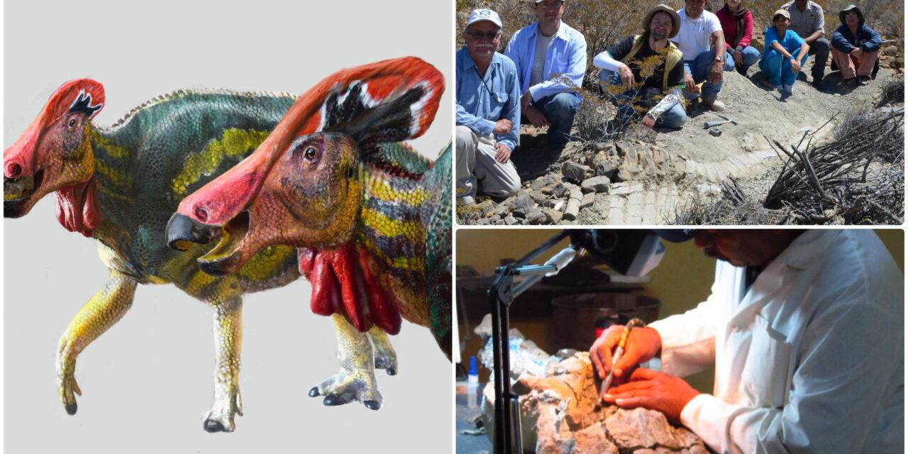 'Tlatolophus galorum', nueva especie de dinosaurio en México