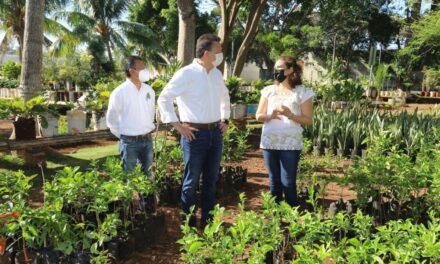 Cruzada Forestal 2021: 10 mil árboles más en Mérida