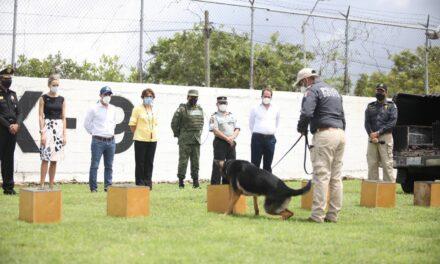 Perros adiestrados entran a detección de Covid-19 en Yucatán