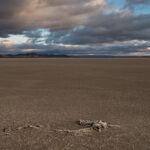 Alerta por desertificación y sequías, en el día de la lucha contra esos fenómenos