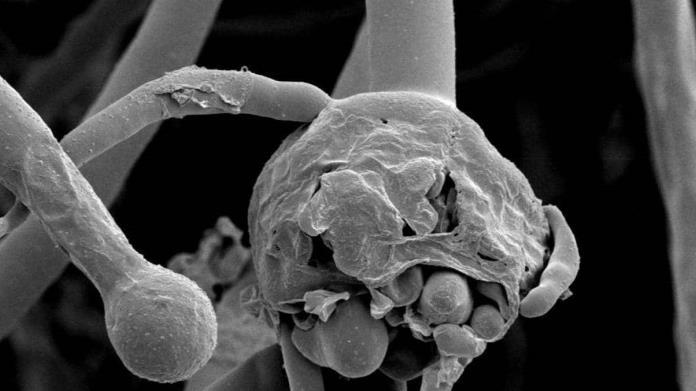 Se registra el primer caso del hongo negro en México
