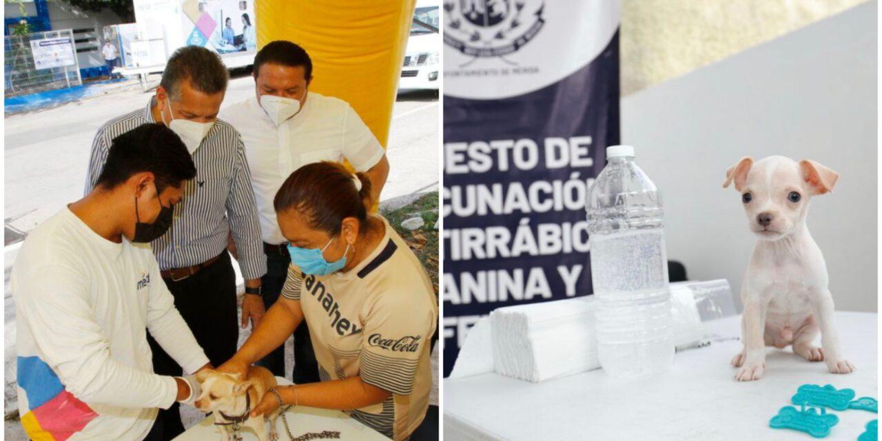 Cuidado y bienestar animal, responsabilidad compartida entre Ayuntamiento y ciudadanos en Mérida
