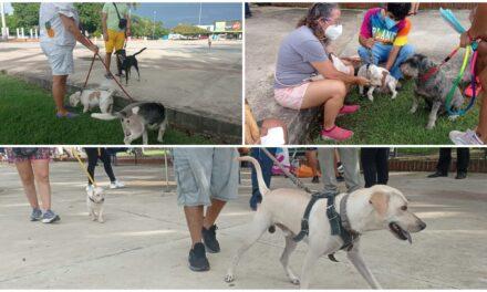 Grave el problema de maltrato animal: suman 700 denuncias ante Fiscalía