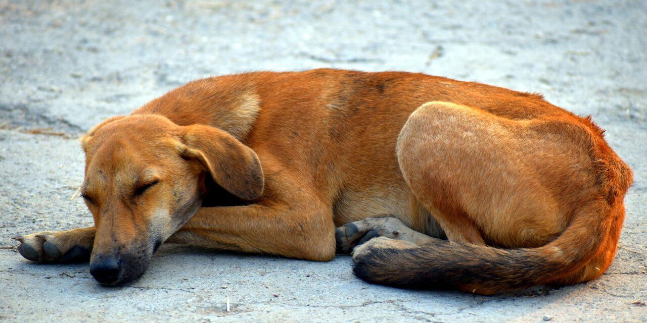 Frenan Reglamento para Protección de la Fauna en Mérida; va nueva revisión